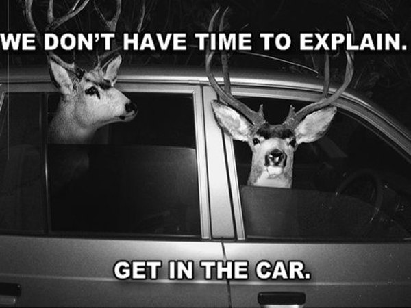 Deer In the A Car - Disruptive Advertising