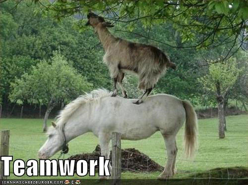 teamwork-goat